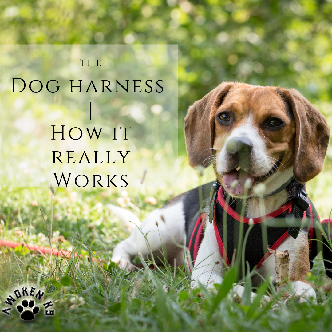 Dog harness how it really works