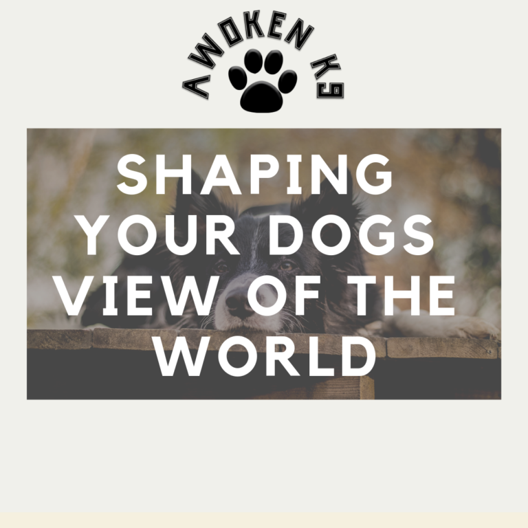 Shaping your dog's view of the world
