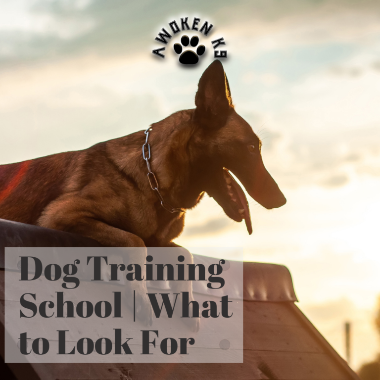 Dog Training School | What to Look For
