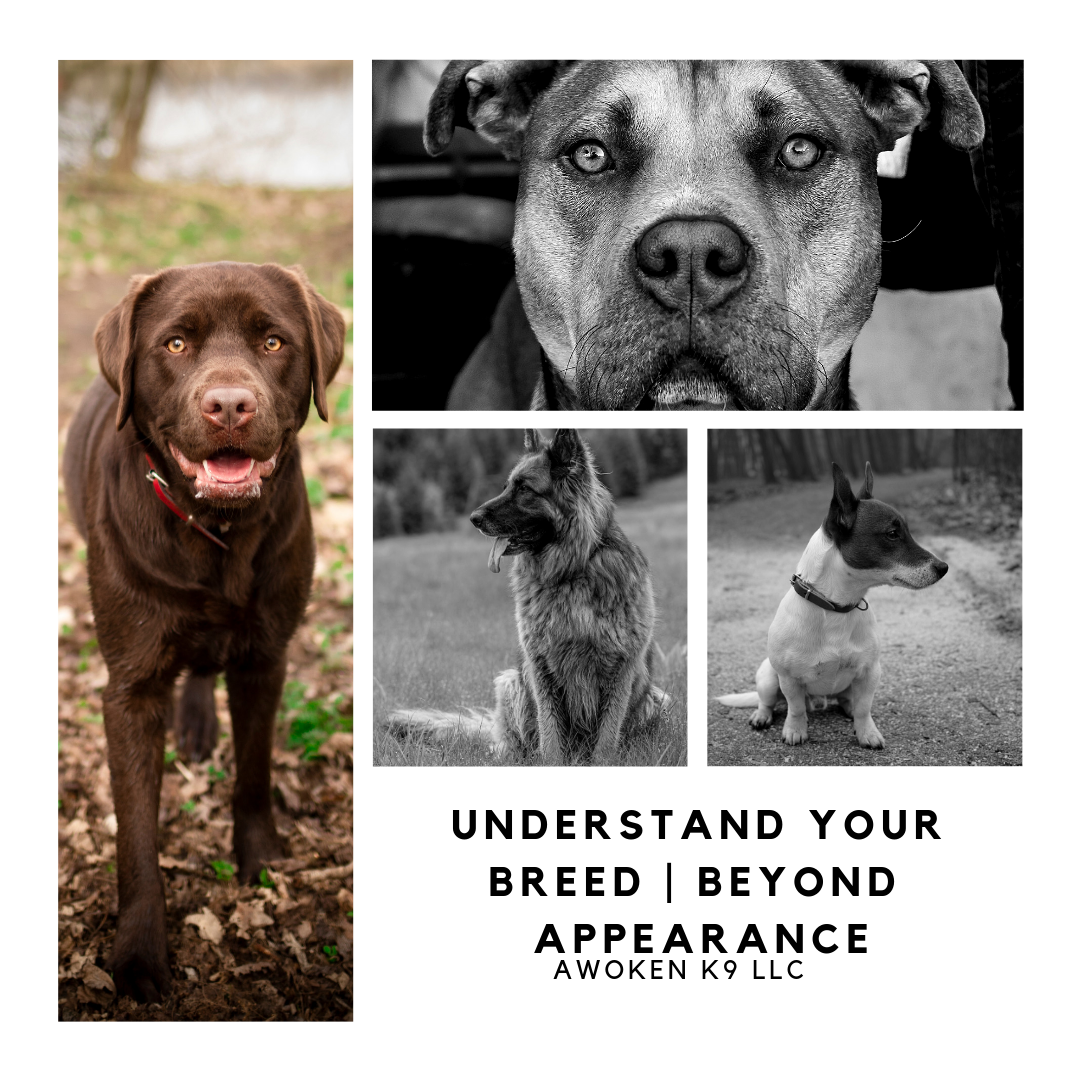 Understand your breed