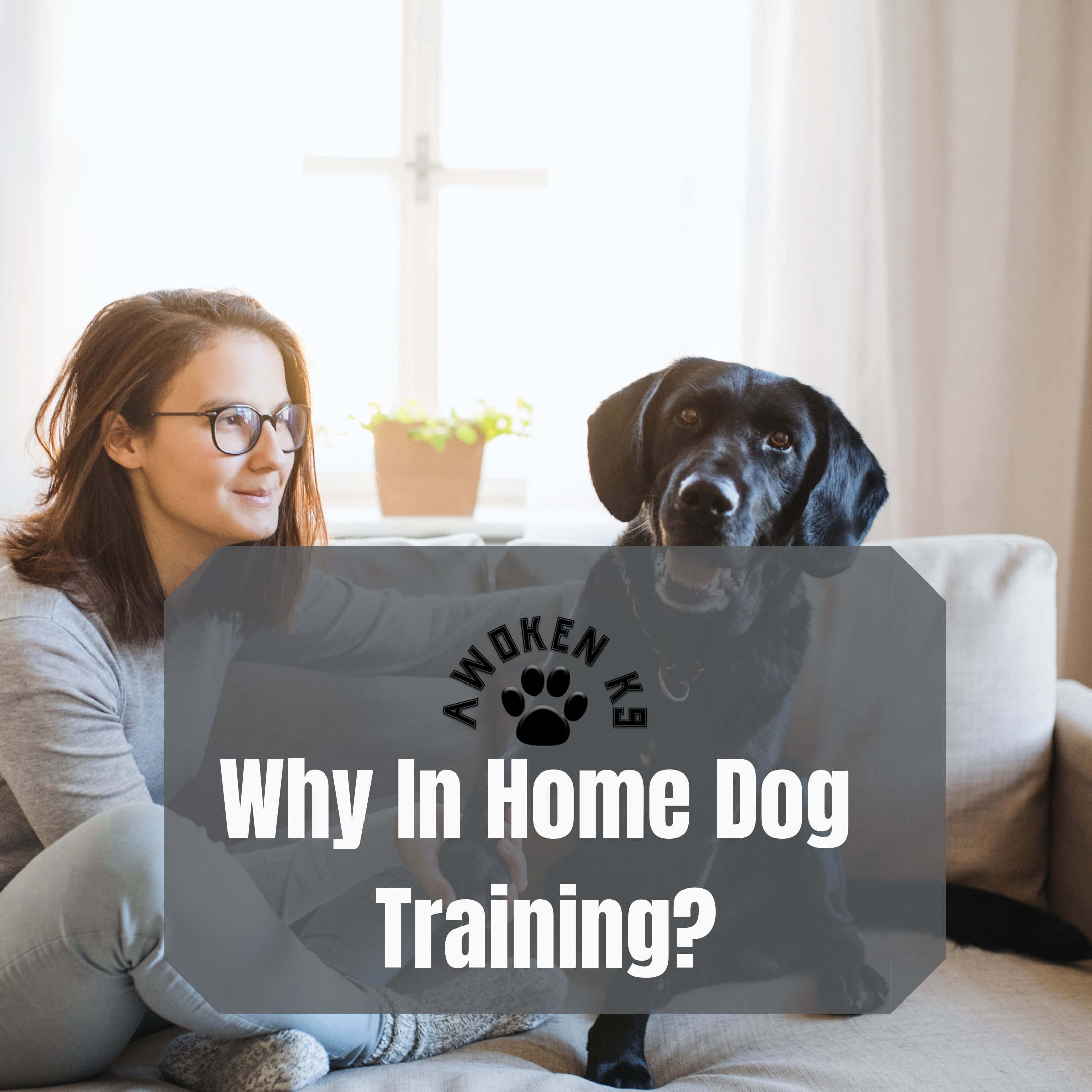 Why In Home Dog Training?