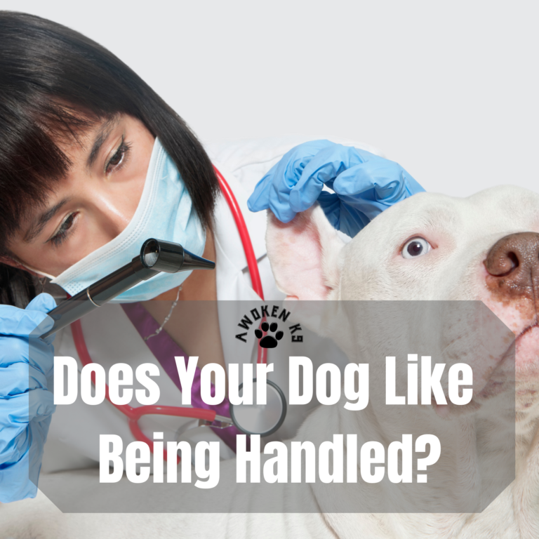 Does your dog like being handled?