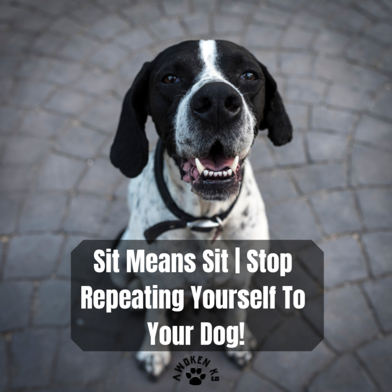 Sit Means Sit | Stop Repeating Yourself to Your Dog!