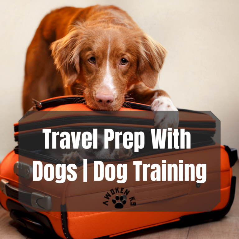 Travel Prep With Dogs | Dog Training
