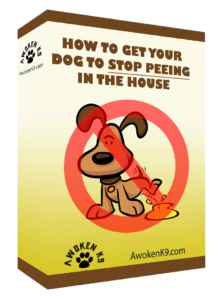 How to get Your Dog from Peeing in the House
