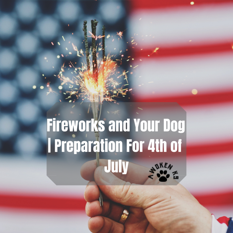 Fireworks and Your Dog | Preparation For 4th of July
