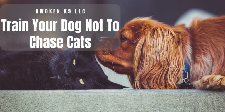 how to train your dog not to chase cats