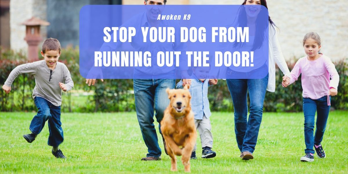 training dog not to run out front door