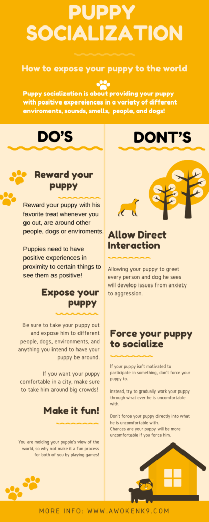 what is dog socialization