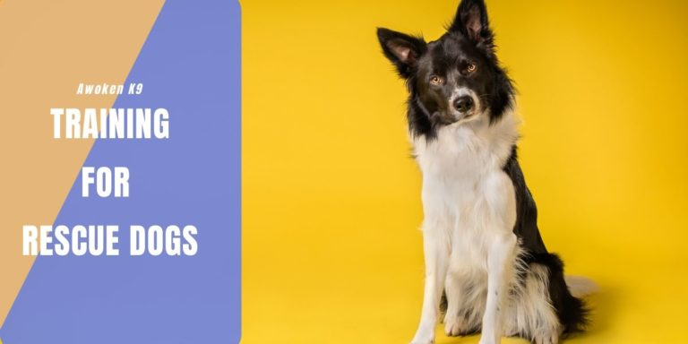 Training For Rescue Dogs