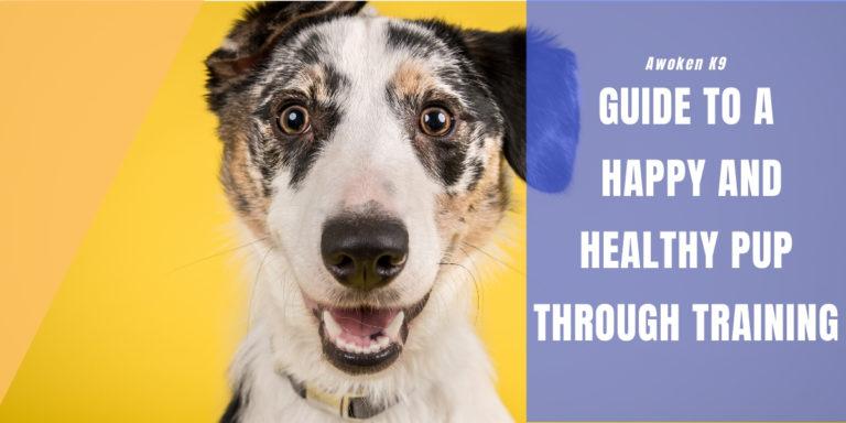 dog food training