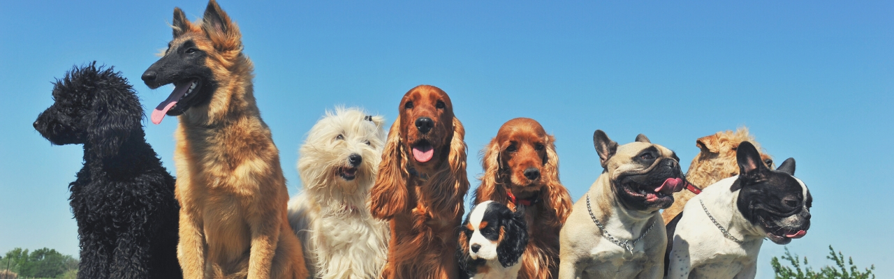 Dog Training Packages