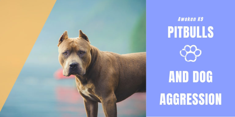 Pitbulls and dog aggression