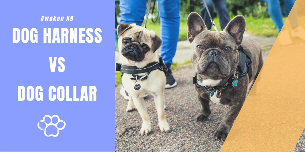 Dog collar vs Harness