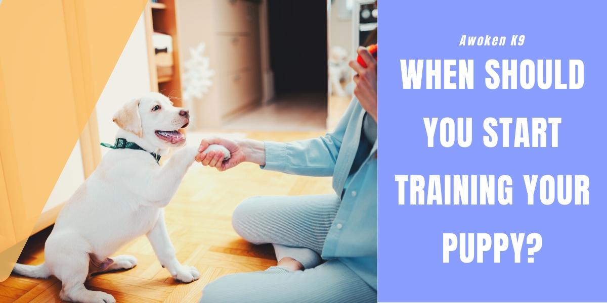 when should puppy training start
