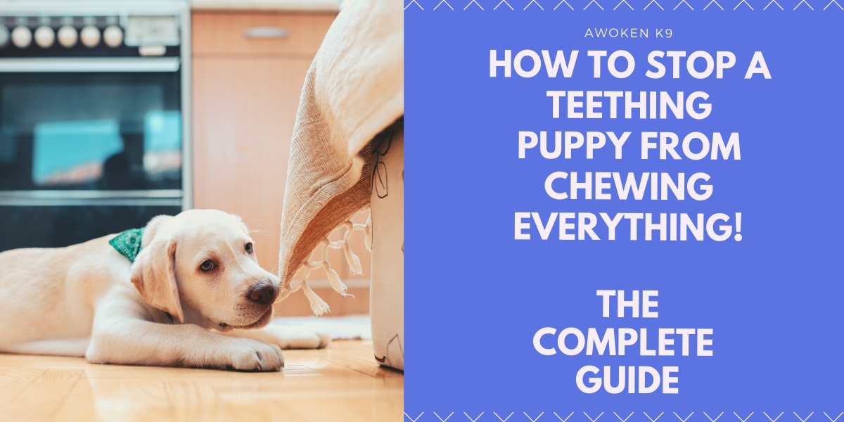 how to stop a teething puppy from chewing everything