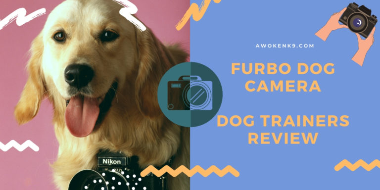furbo dog camera review