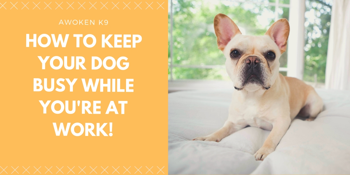 how to keep a dog busy while at work