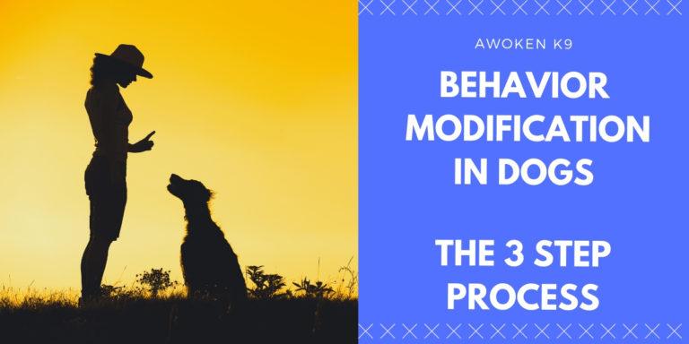 behavior modification in dogs