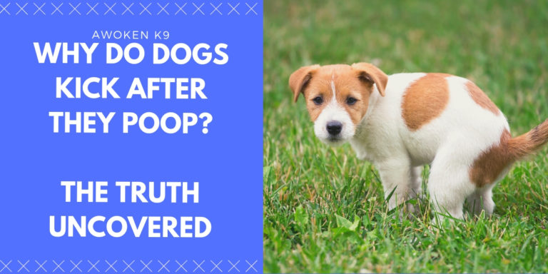 why do dogs kick after they poop?
