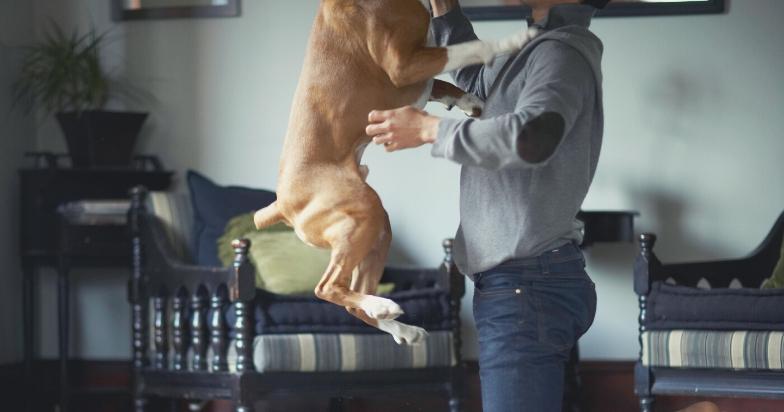 Large dog training