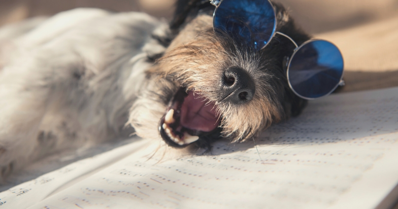 why do dogs teeth chatter