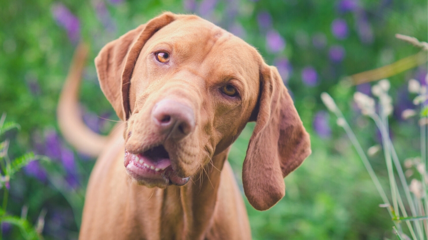 Dog Training For Beginners