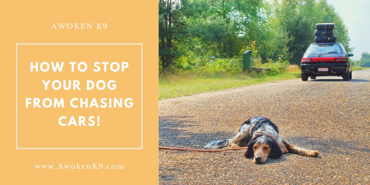 How to stop dog chasing cars