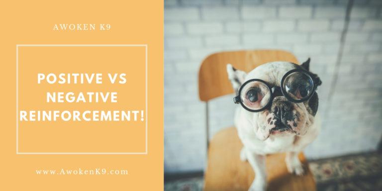 dog training positive vs negative reinforcement