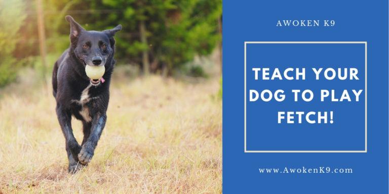 teach dog to play fetch