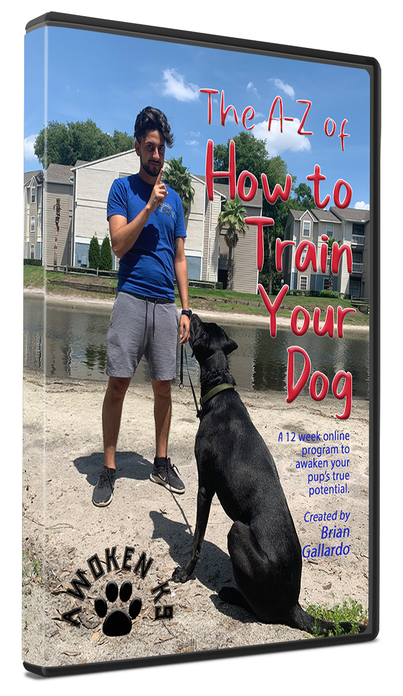 A-Z of How to Train Your Dog