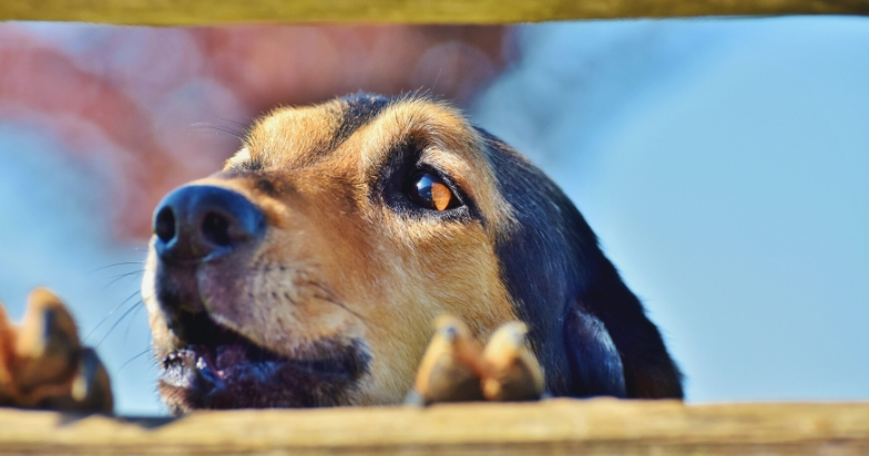 Do Dogs Get Tired Of Barking?