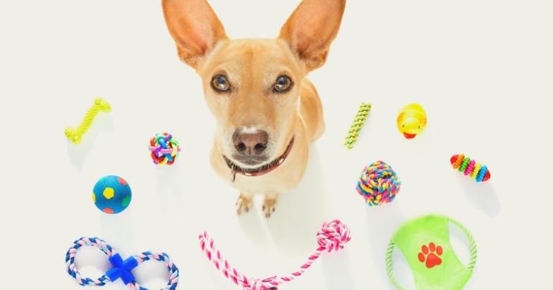 stop dog barking on a leash