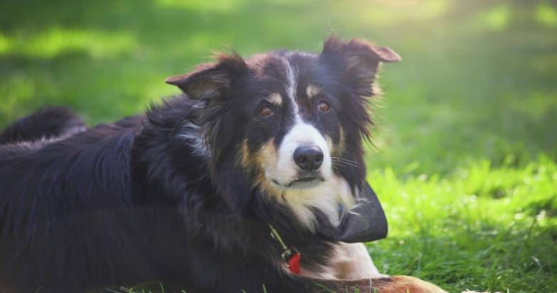 Why Do Dog's Bark?