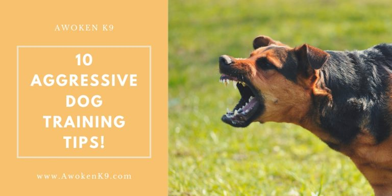 dog aggression training tips