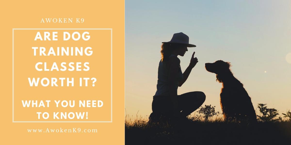 Are Dog Training Classes Worth It?