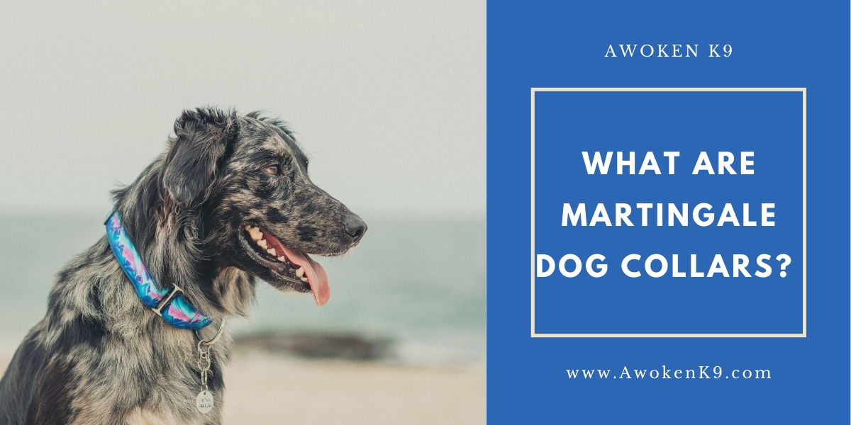 what are martingale dog collars