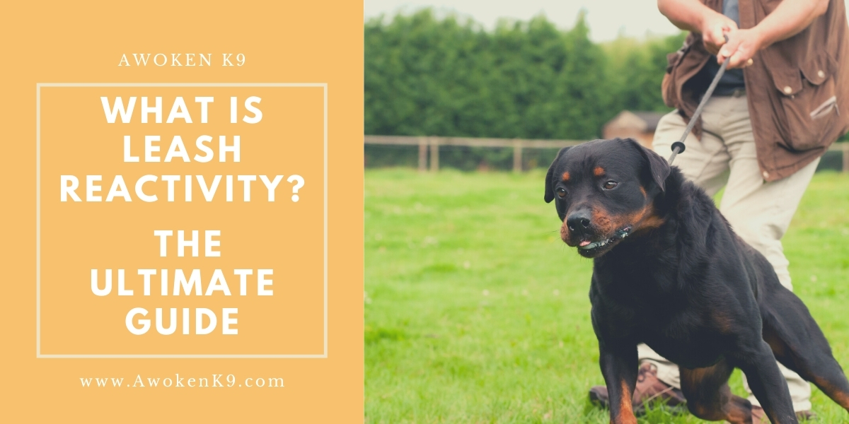 What Is Leash Reactivity